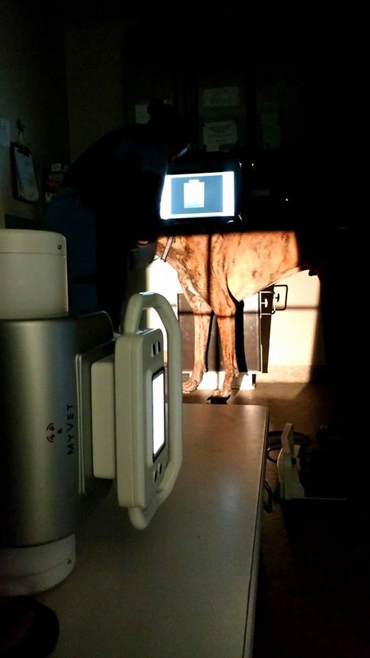 Animerge MyVet i72w X-ray